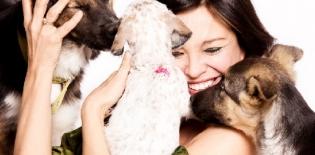 animali - coka - Shutterstock.com